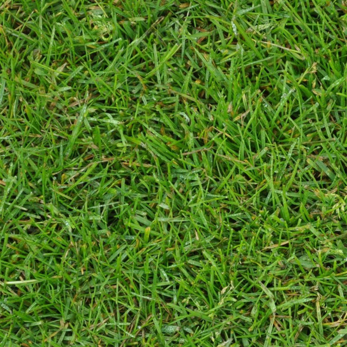 Cỏ nhân tạo/ Grass